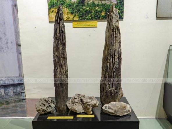 Wooden stakes in Vinh Bao Hai Phong Museum