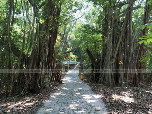 Ancient trees along the way to Hideaway in Hai Phong