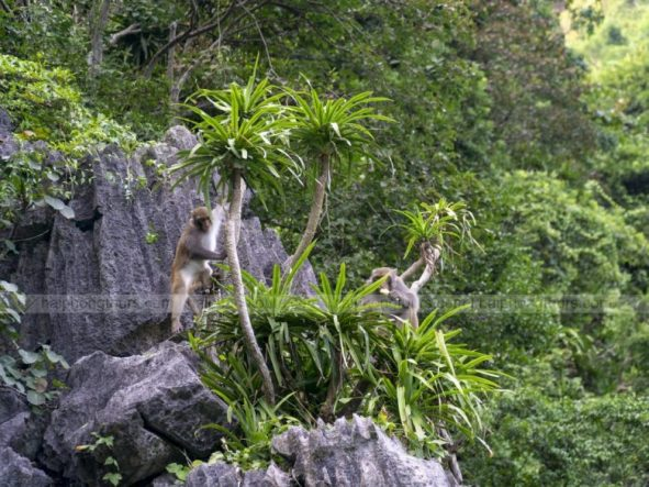 Monkeys in Luon cave Halong bay