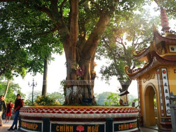 Sri Maha Bodhi tree Tran Quoc pagoda